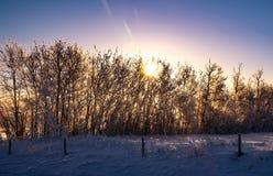 Salida del sol en la hilera de árboles Imagen de archivo libre de regalías