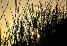 Salida del sol en la playa Foto de archivo libre de regalías