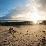 Salida del sol en la playa con la ramificación en primero plano Fotos de archivo libres de regalías