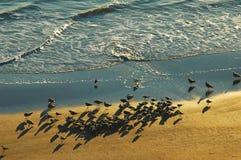 Salida del sol en la playa la Florida de Daytona Fotografía de archivo