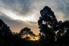 Salida del sol en la selva tropical de Bornean Fotos de archivo libres de regalías