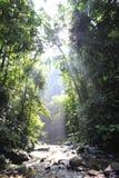 Salida del sol en la selva tropical de Bukit Lawang Fotografía de archivo