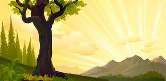 Salida del sol en las colinas Fotos de archivo libres de regalías