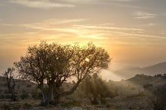 Salida del sol en las montañas con rayos solares fotos de archivo