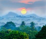 Salida del sol en las selvas fotos de archivo