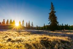 Salida del sol en los bosques del parque natural de Apuseni Fotos de archivo
