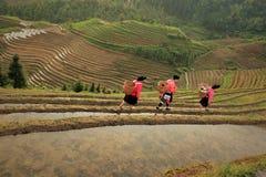 Salida del sol en los campos del arroz en China Foto de archivo libre de regalías