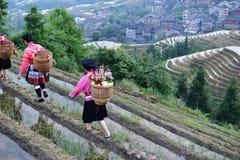 Salida del sol en los campos del arroz en China Imágenes de archivo libres de regalías