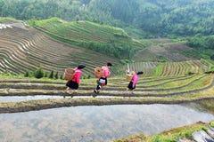Salida del sol en los campos del arroz en China Fotografía de archivo