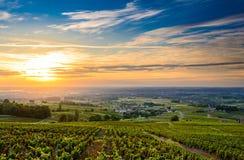 Salida del sol en los viñedos del Beaujolais, Beaujolais, Francia Imagen de archivo
