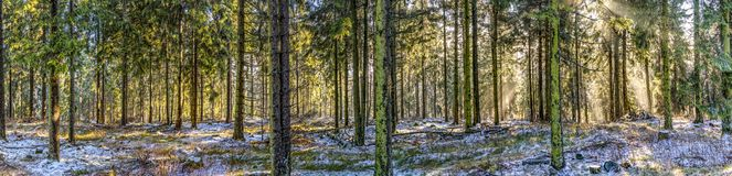 Salida del sol en madrugada en el bosque con el rayo de sol brillante imagen de archivo