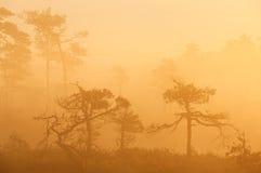Salida del sol en pantano Imagen de archivo libre de regalías