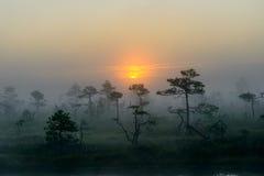 Salida del sol en pantano Imagenes de archivo