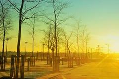 Salida del sol en parque de la ciudad Imagen de archivo