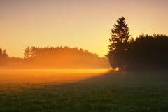 Salida del sol en prado de niebla de la mañana Fotos de archivo