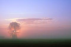 Salida del sol en prado nebuloso Fotos de archivo