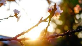 Salida del sol en primavera con las floraciones Fotos de archivo libres de regalías