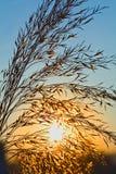 Salida del sol en resorte o verano Fotos de archivo libres de regalías