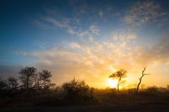Salida del sol en sabana Fotos de archivo