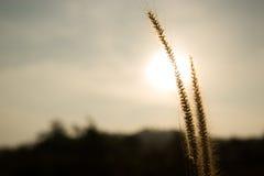 Salida del sol en Tailandia Imagen de archivo libre de regalías