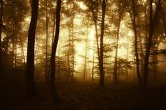 Salida del sol en un bosque encantado misterioso con niebla Foto de archivo