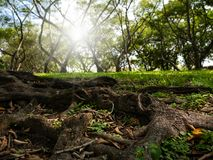 Salida del sol en un bosque hermoso Fotografía de archivo