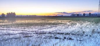 Salida del sol en un campo de arroz, primavera Imagen del color Foto de archivo