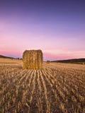 Salida del sol en un campo de trigo segado Imagen de archivo libre de regalías