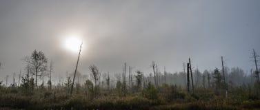 Salida del sol en un pantano con los árboles muertos en niebla fotos de archivo