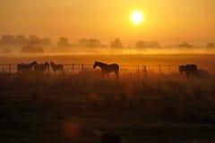 Salida del sol en un prado del caballo Foto de archivo