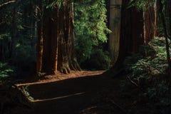 Salida del sol en un rastro en parque nacional de las secoyas Imagen de archivo