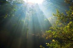 Salida del sol en una isla tropical Foto de archivo