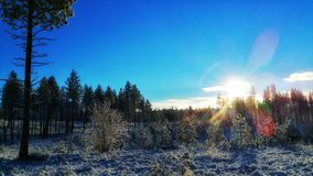 Salida del sol en una mañana fresca nevosa Imagenes de archivo