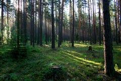 Salida del sol en una madera. Foto de archivo libre de regalías