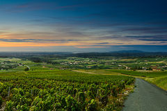 Salida del sol en viñedos, Beaujolais, Francia Fotos de archivo libres de regalías