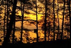 Salida del sol entre los árboles Imágenes de archivo libres de regalías