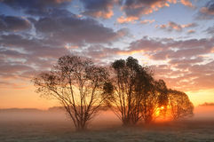 Salida del sol entre los árboles en un prado brumoso foto de archivo libre de regalías