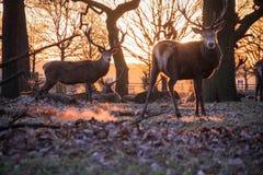 Salida del sol escarchada de la mañana Imagenes de archivo