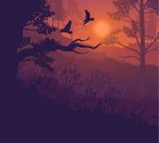 Salida del sol Forest Landscape Background Fotografía de archivo