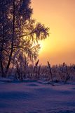 Salida del sol fría caliente del invierno Foto de archivo libre de regalías