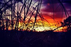 Salida del sol herbosa Fotos de archivo libres de regalías