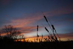 Salida del sol hermosa con el prado y los árboles Imagenes de archivo