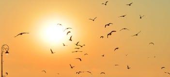 Salida del sol hermosa con las siluetas de pájaros Imagen de archivo