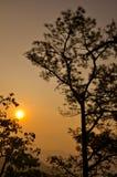 Salida del sol hermosa en bosque Imagenes de archivo