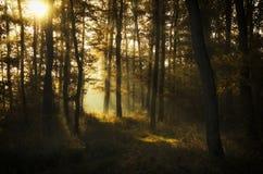 Salida del sol hermosa en verano imagenes de archivo