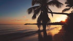 Salida del sol hermosa sobre la playa tropical con las palmeras del coco metrajes