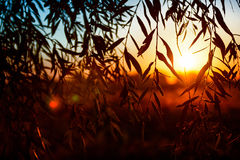 Salida del sol hermosa sobre un campo visto a través de los leafes Imagenes de archivo