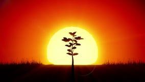 Salida del sol hermosa y árbol creciente Animación del logro y del concepto 3d del progreso El sol naciente da nueva vida HD 1080