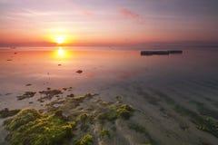 Salida del sol hermosa y tranquila cerca de una playa por completo con algas marinas Imagenes de archivo