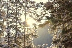 Salida del sol imperecedera retroiluminada Foto de archivo